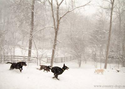 country-dogs-winter-boarding