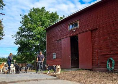 country-dogs-bikebarndogs