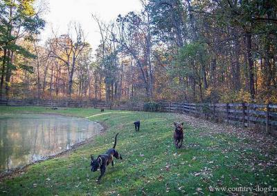 country-dogs-camp-pond-run